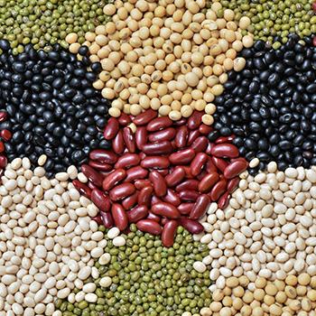 Beans, Lentils, Seed