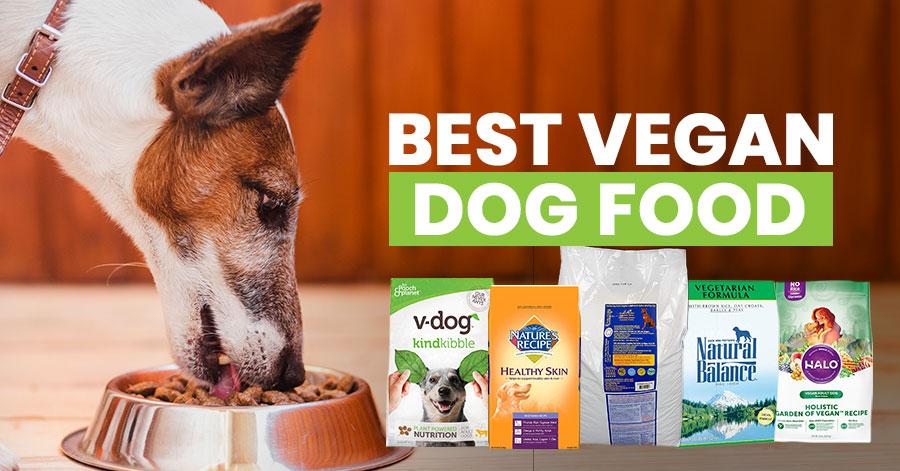 Best vegan dog food Featured image