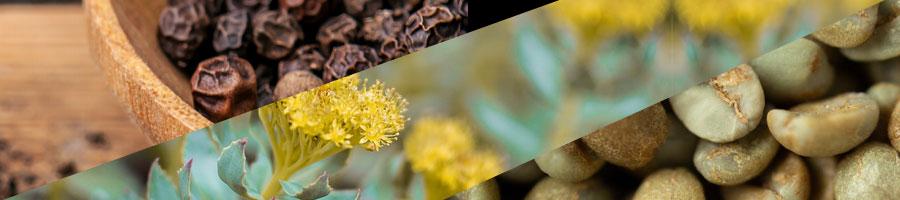 bipherine, rhodiola flower, green coffee beans