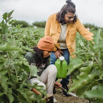 women harvesting crops